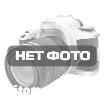 Сосна крымская (400-500 см)